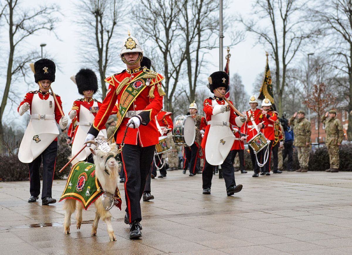 Goat marching