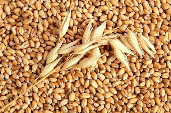 Fodder oats food oats